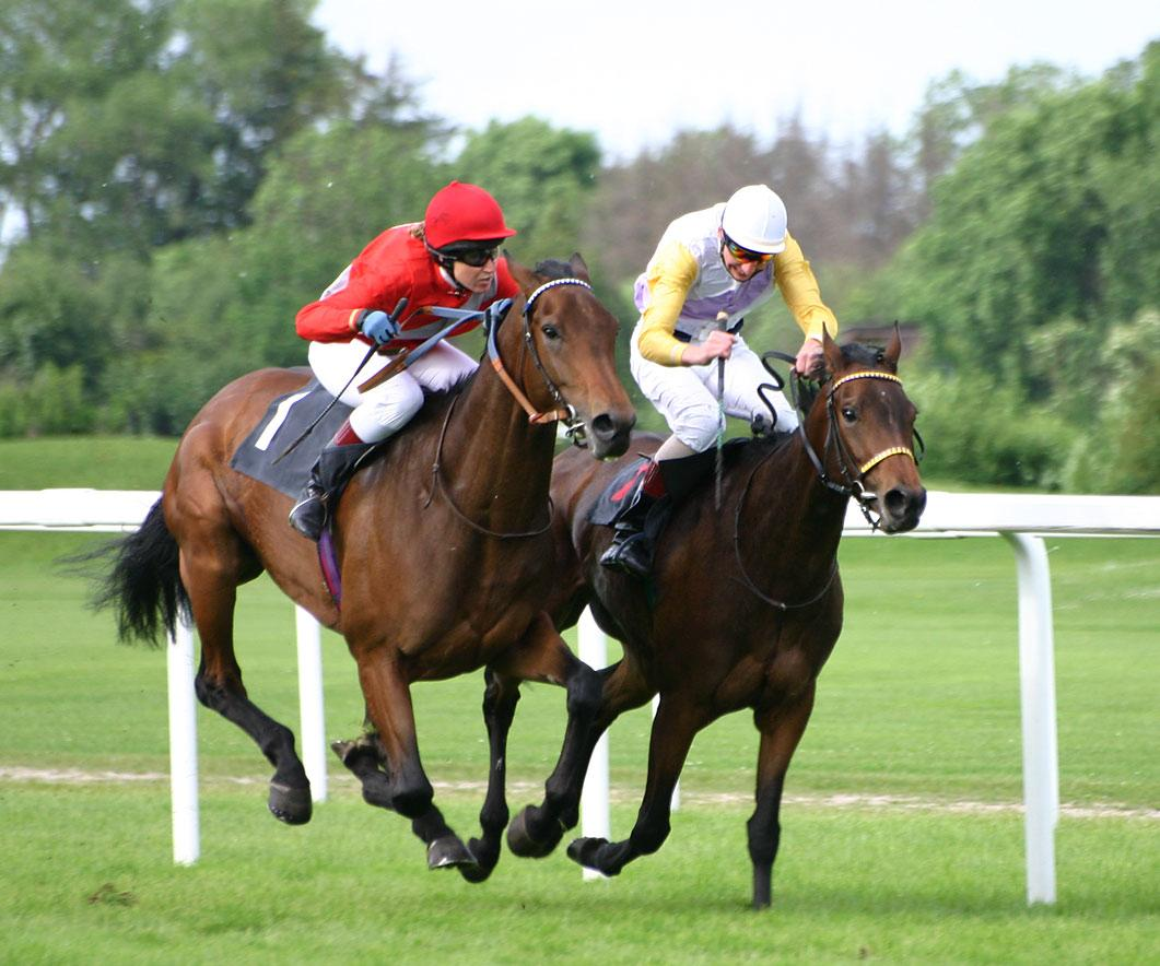 Are racehorses treated badly?