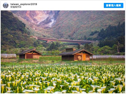 2021陽明山賞花 採海芋 推薦:適合親子的財福海芋田,包含交通方式、開放時間