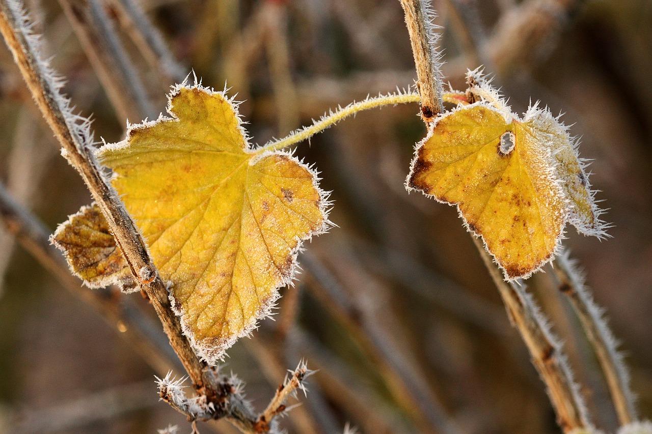 autumn-542459_1280.jpg