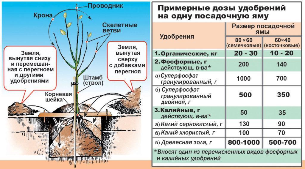 Дозы удобрений