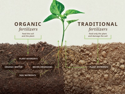 organicsoil.jpg