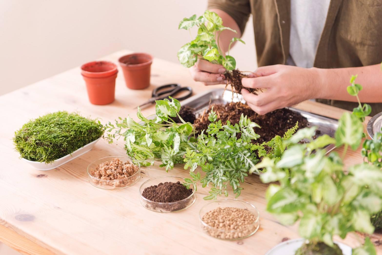 苔球DIY-組合植栽