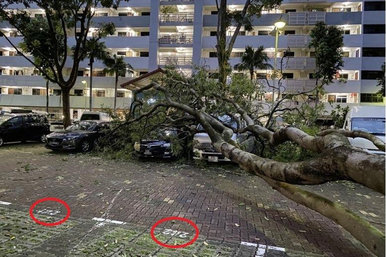 Cars hit by fallen tree