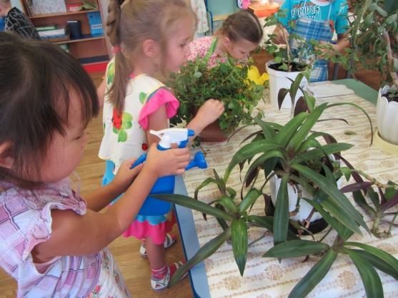 «Растения нашей группы» Проект по изучению комнатных растений.