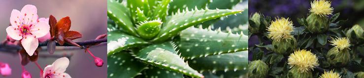 Ingredients:Aloe Vera, coconut oil, palm oil, safflower seed oil, fragrance