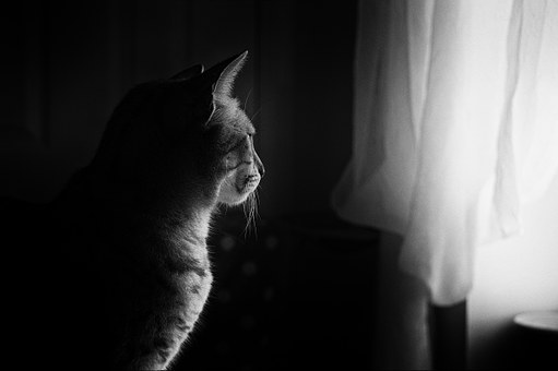 indoor cat stares out the window