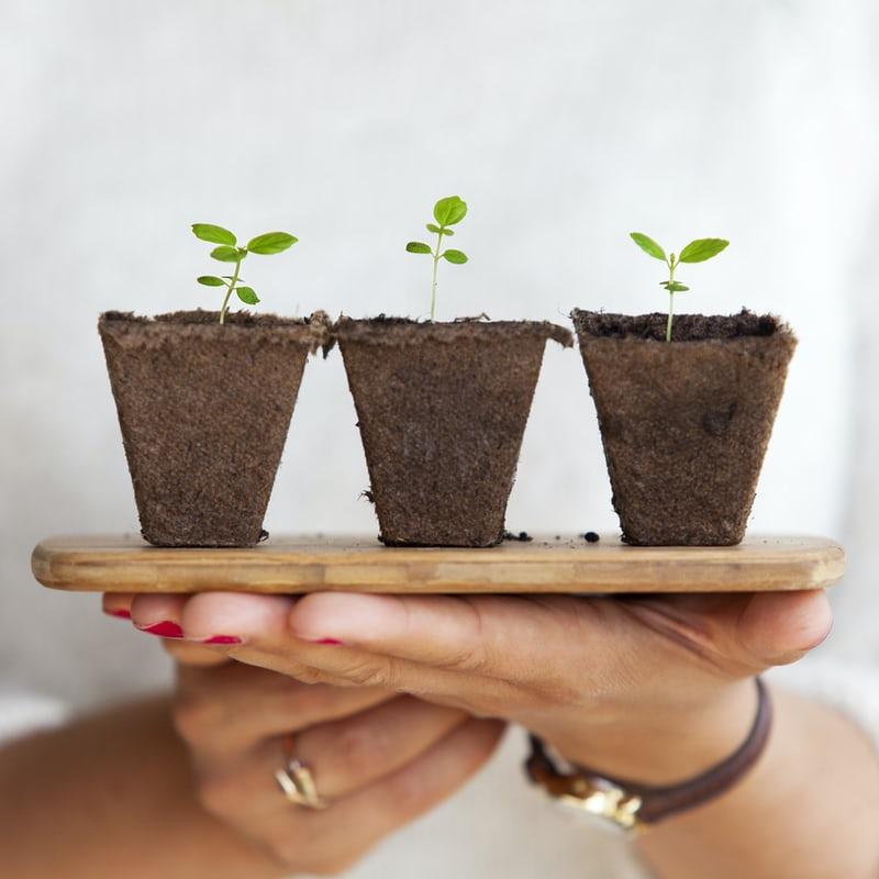 woman holding three newborn plants