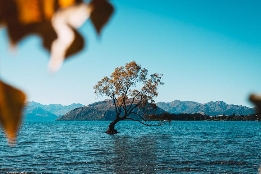 That Wanaka Tree at Lake Wanaka.