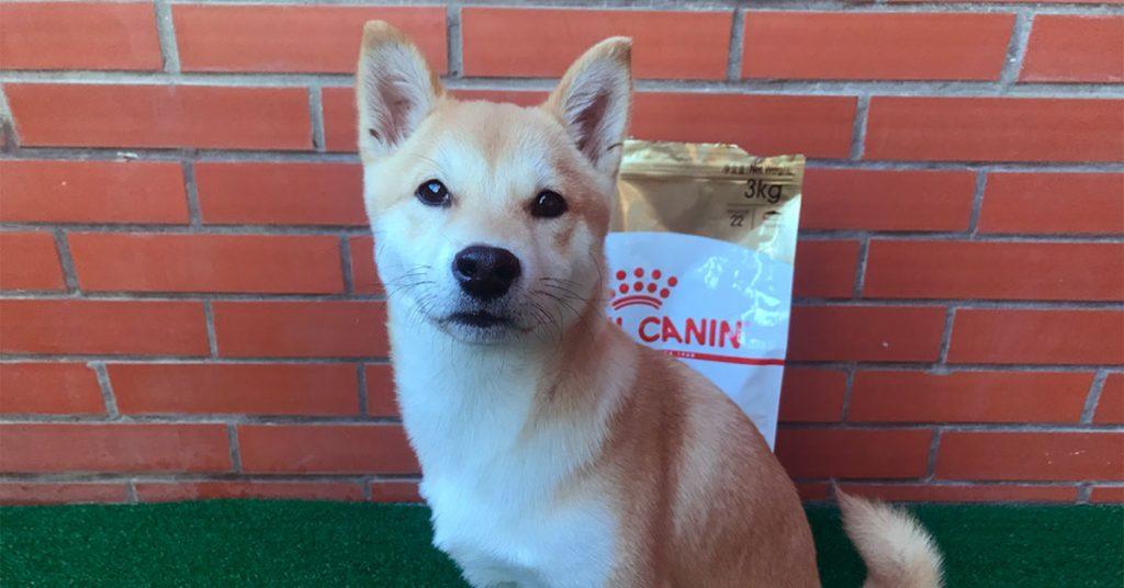 Royal Canin Shiba Inu food