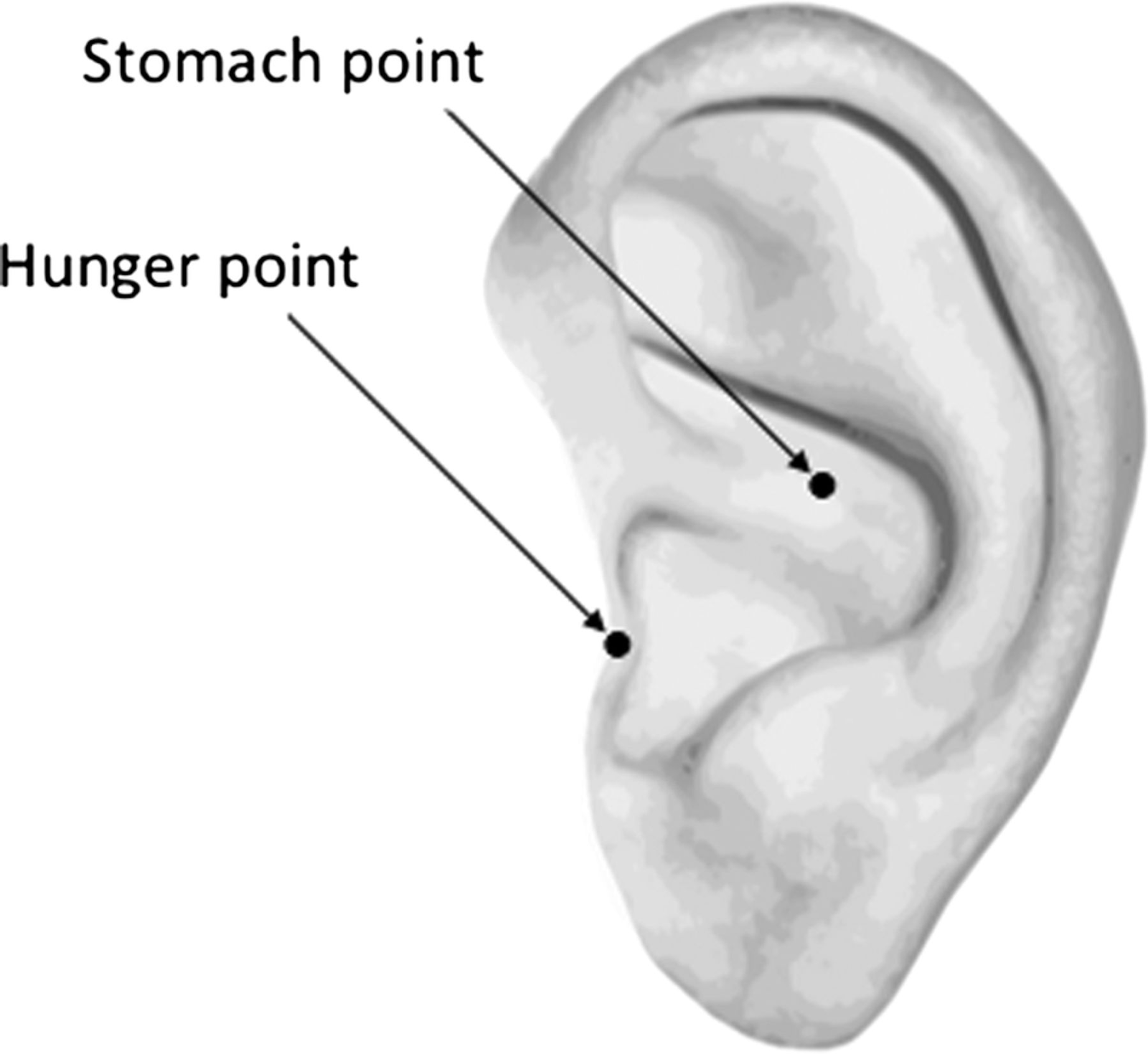Ear Acupuncture Stomach and Hunger Points