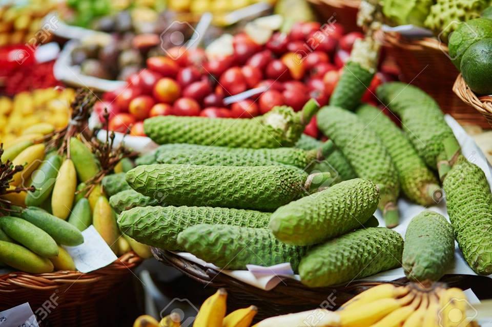 Quả của Trầu bà Nam Mỹ có thể ăn như 1 loại trái cây thơm ngon