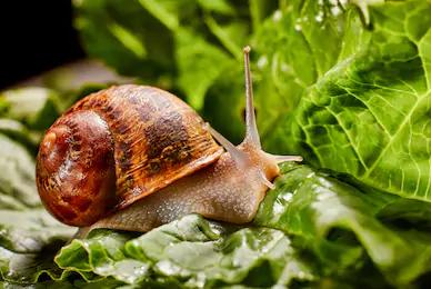 Parmi les arnaques les plus célèbres, on retrouve un traitement contre l'arthrose à base de bave d'escargot