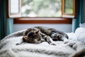 Complications of feline kidney disease