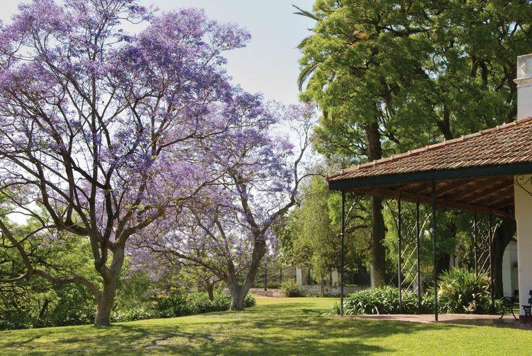 El jardín de la Quinta Los Ombúes, en San Isidro, se puede visitar los fines de semana