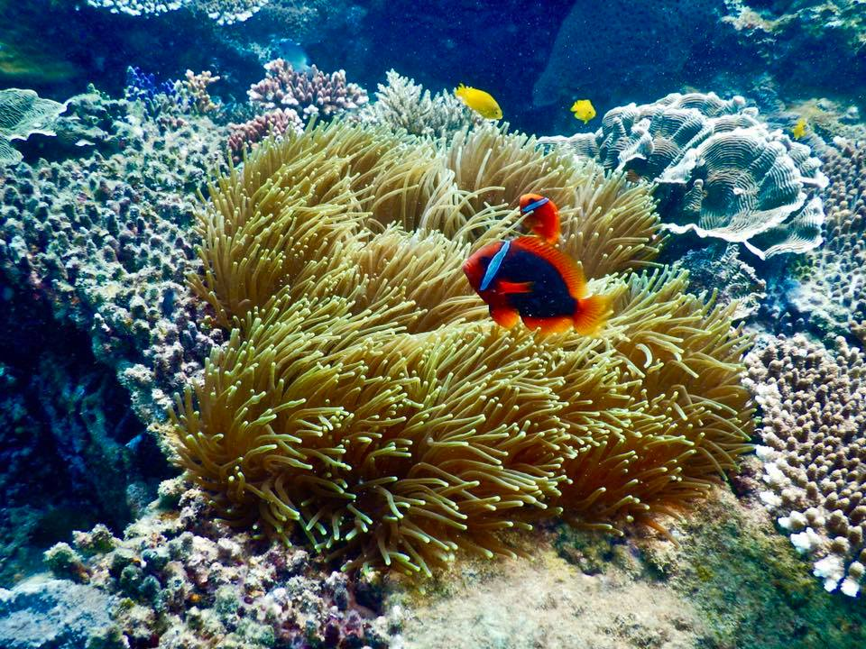 Image result for san hô côn đảo