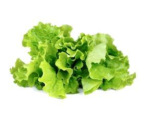 lettuce ile ilgili görsel sonucu