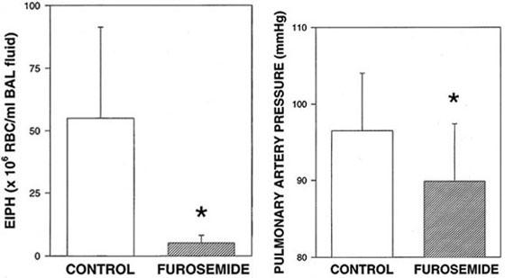 Furosemide significantly reduced the severity of EIPH (bronchoalveolar lavage) and pulmonary artery pressure in 5 Thoroughbred horses run to near maximal speeds (14 m/s) on the treadmill [72].