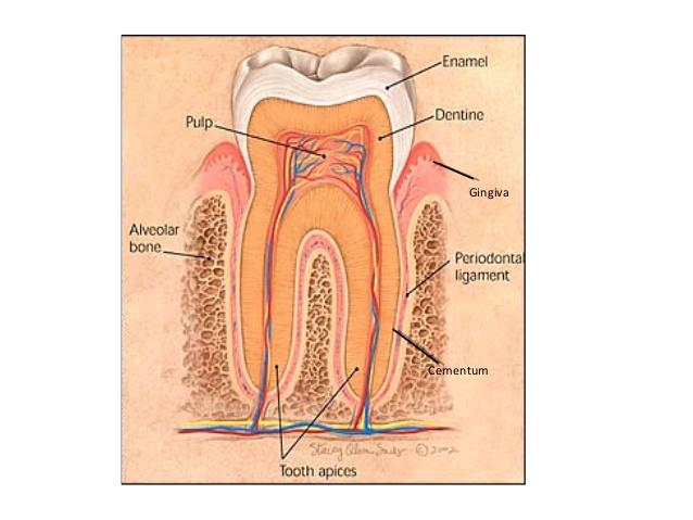juvenile-periodontitis-4-638.jpg