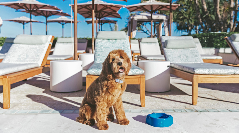 Dog Friendly Places in NYC Four Seasons Hotel