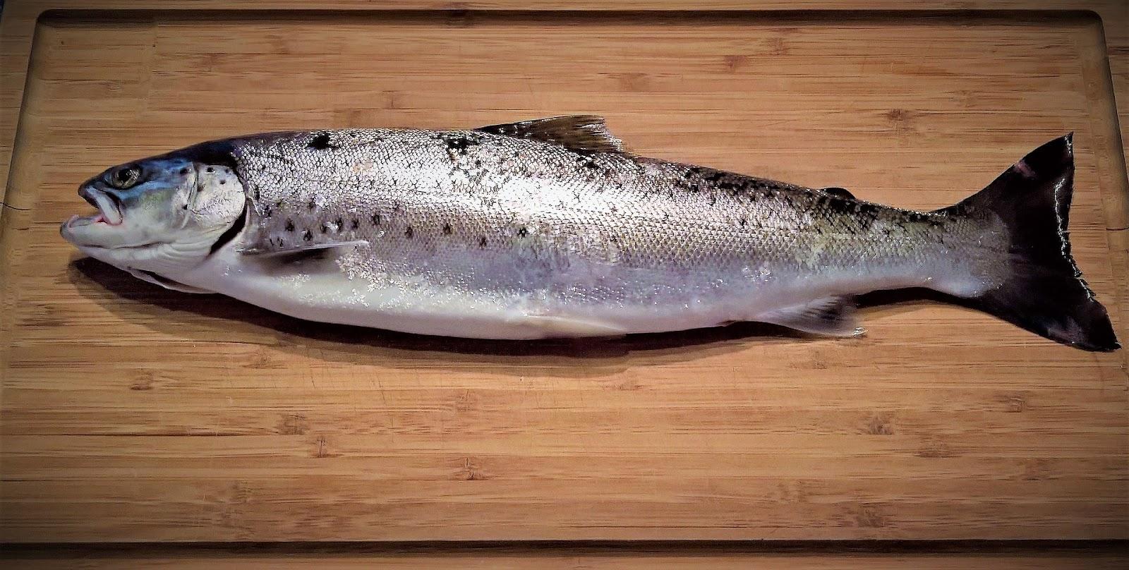 fish on cutting board