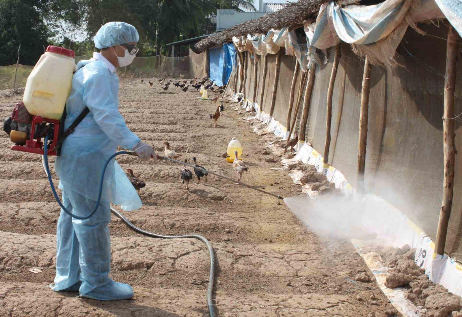 Phòng bệnh đậu gà