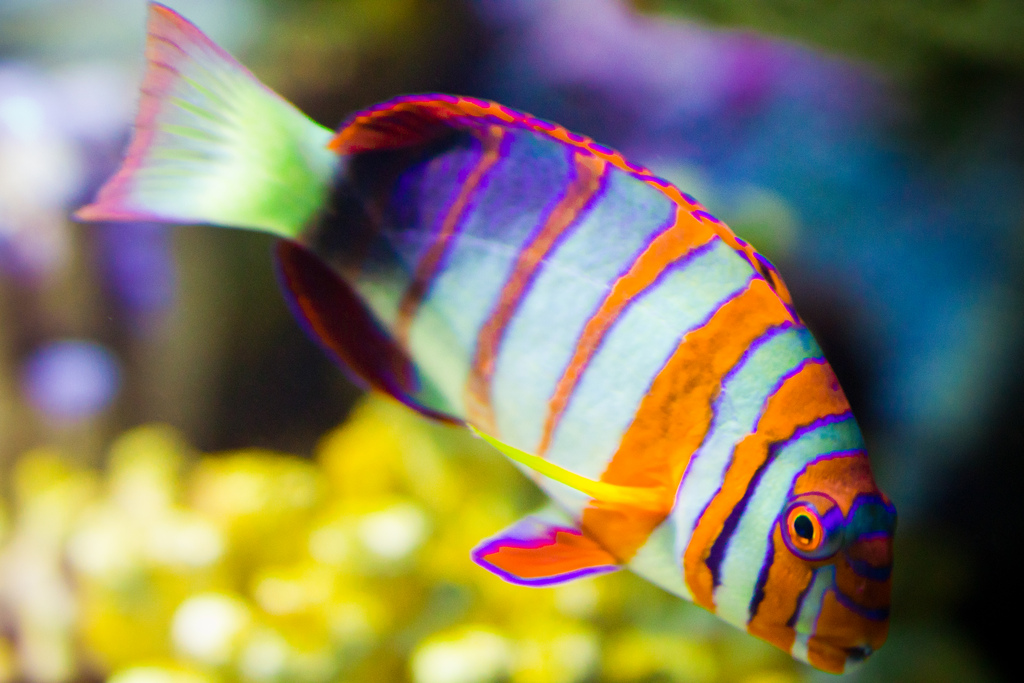 Fish at the Aquarium | by