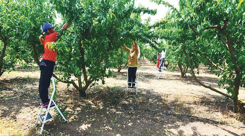 Πρώτη φορά νέοι Έλληνες στα χωράφια για δουλειά