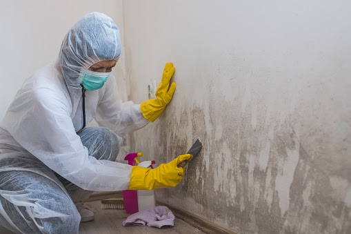 mold removal company in Atlanta