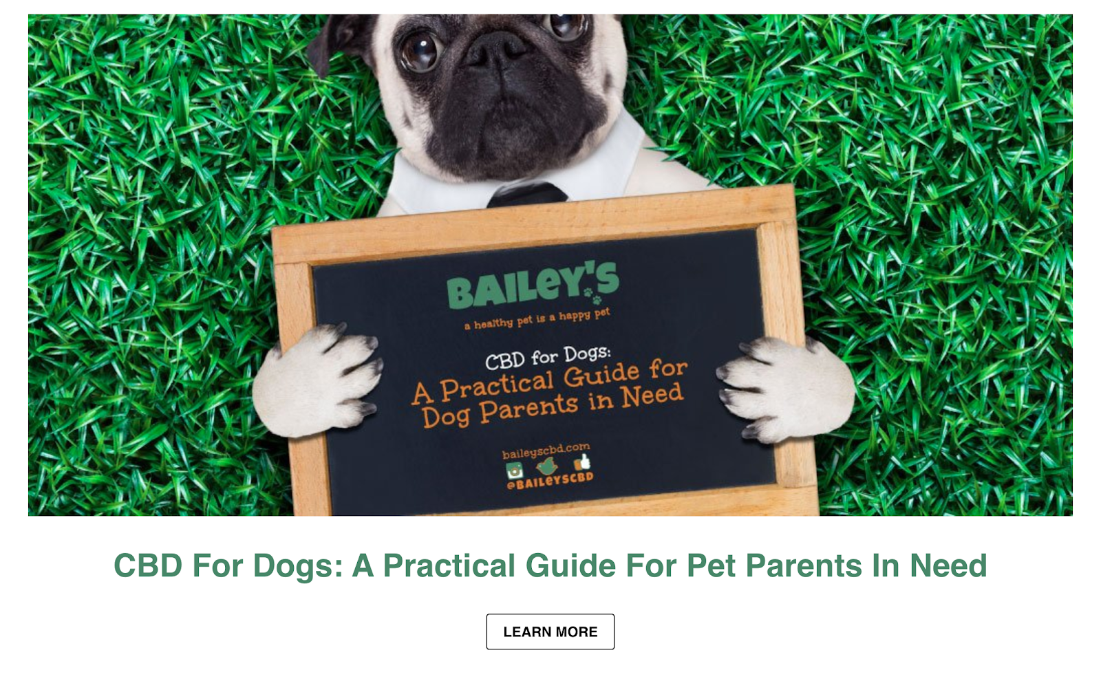 Screenshot of the cover of Bailey's CBD blog article about CBD for dogs