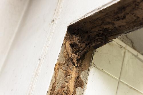 The Effects of Severe Termite Infestations—Always Be Prepared!