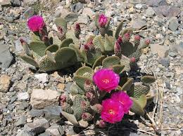 Image result for desert plants