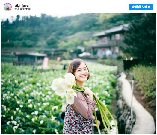 2021陽明山賞花 採海芋 推薦:大賞園海芋園,包含交通方式、開放時間