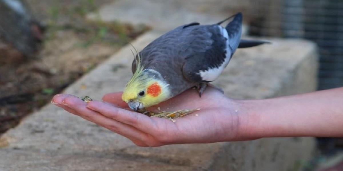 Mão segurando pássaro  Descrição gerada automaticamente