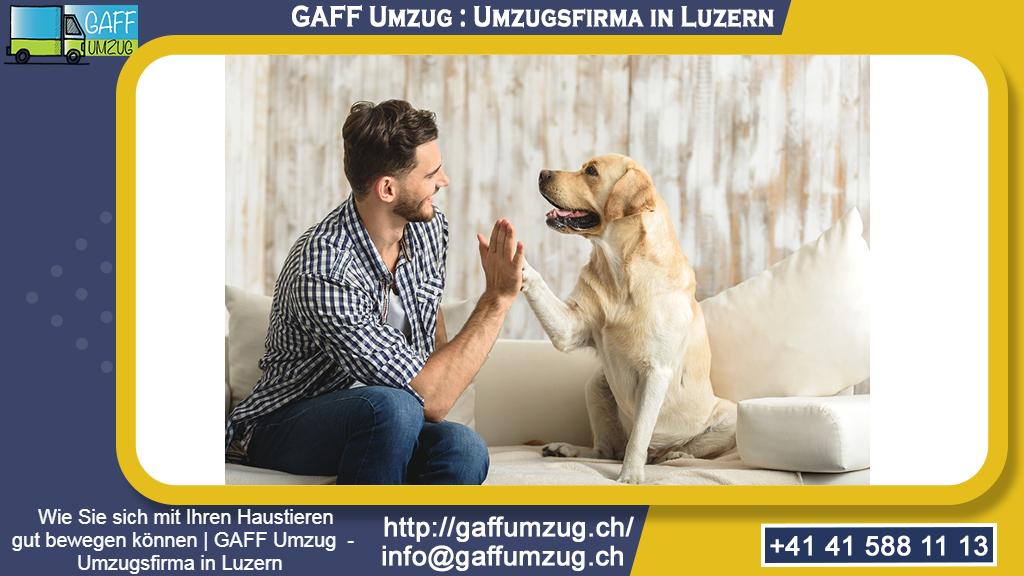 Wie Sie sich mit Ihren Haustieren gut bewegen können | GAFF Umzug  - Umzugsfirma in Luzern
