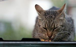 How to keep wet cat food fresh