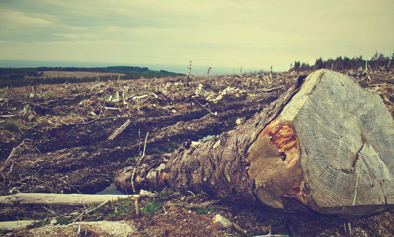 D:\deforestation-405749_1920.jpg