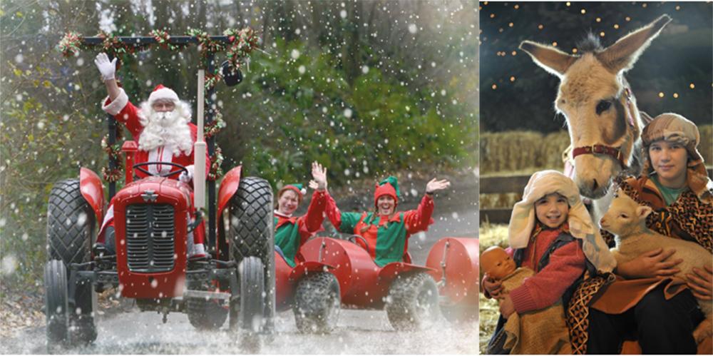 Christmas fun at Pennywell Farm.