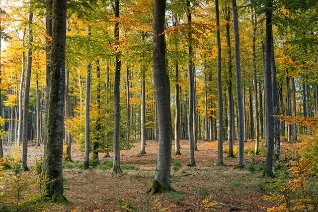 forest near milwaukee michigan