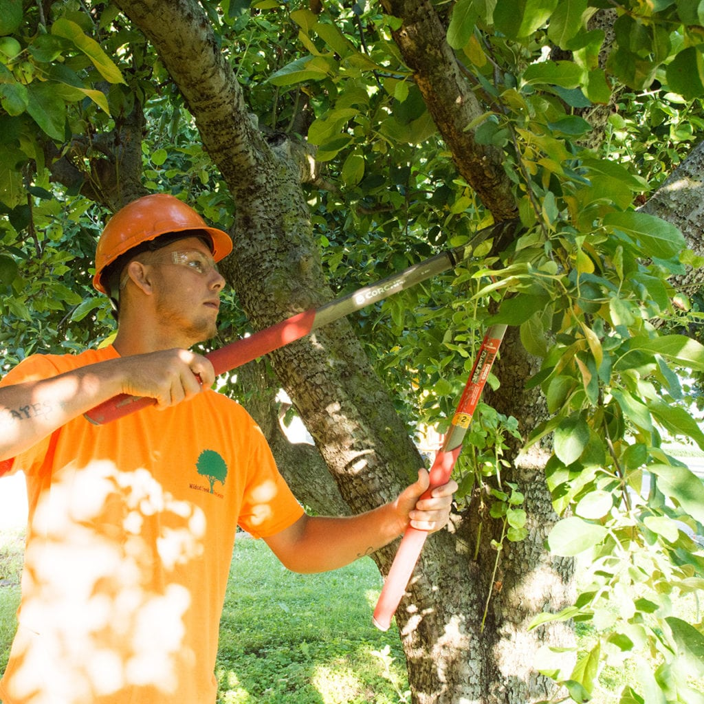 wildcat creek tree service provides pruning services