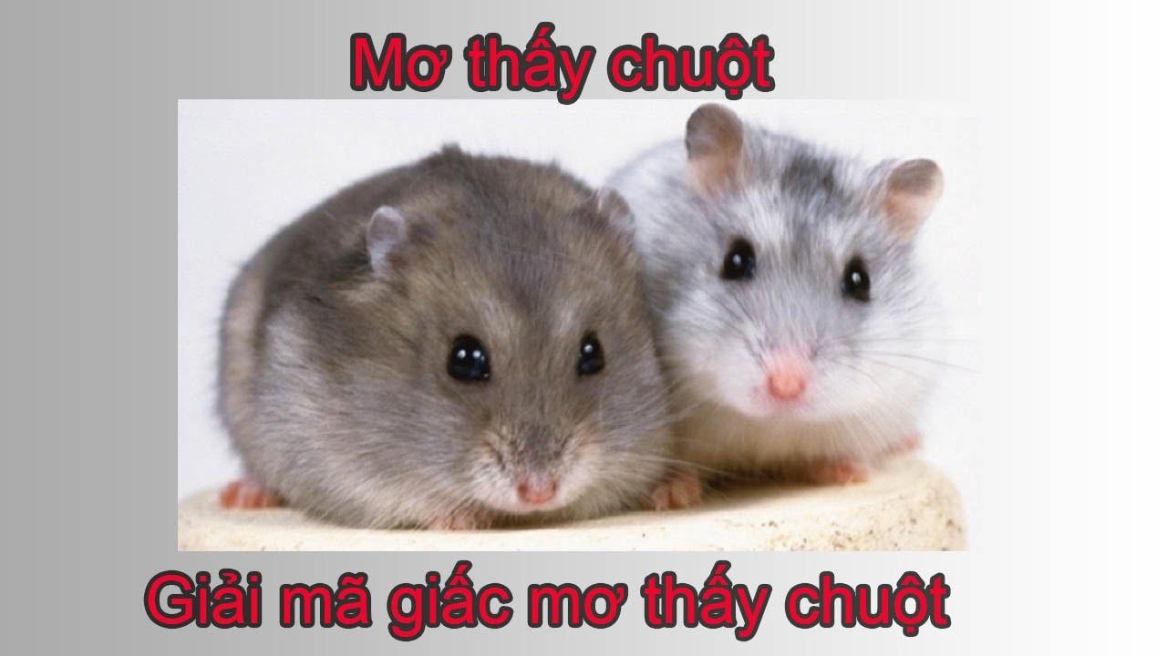 Mơ thấy chuột là điềm báo về các hành động trong cuộc sống