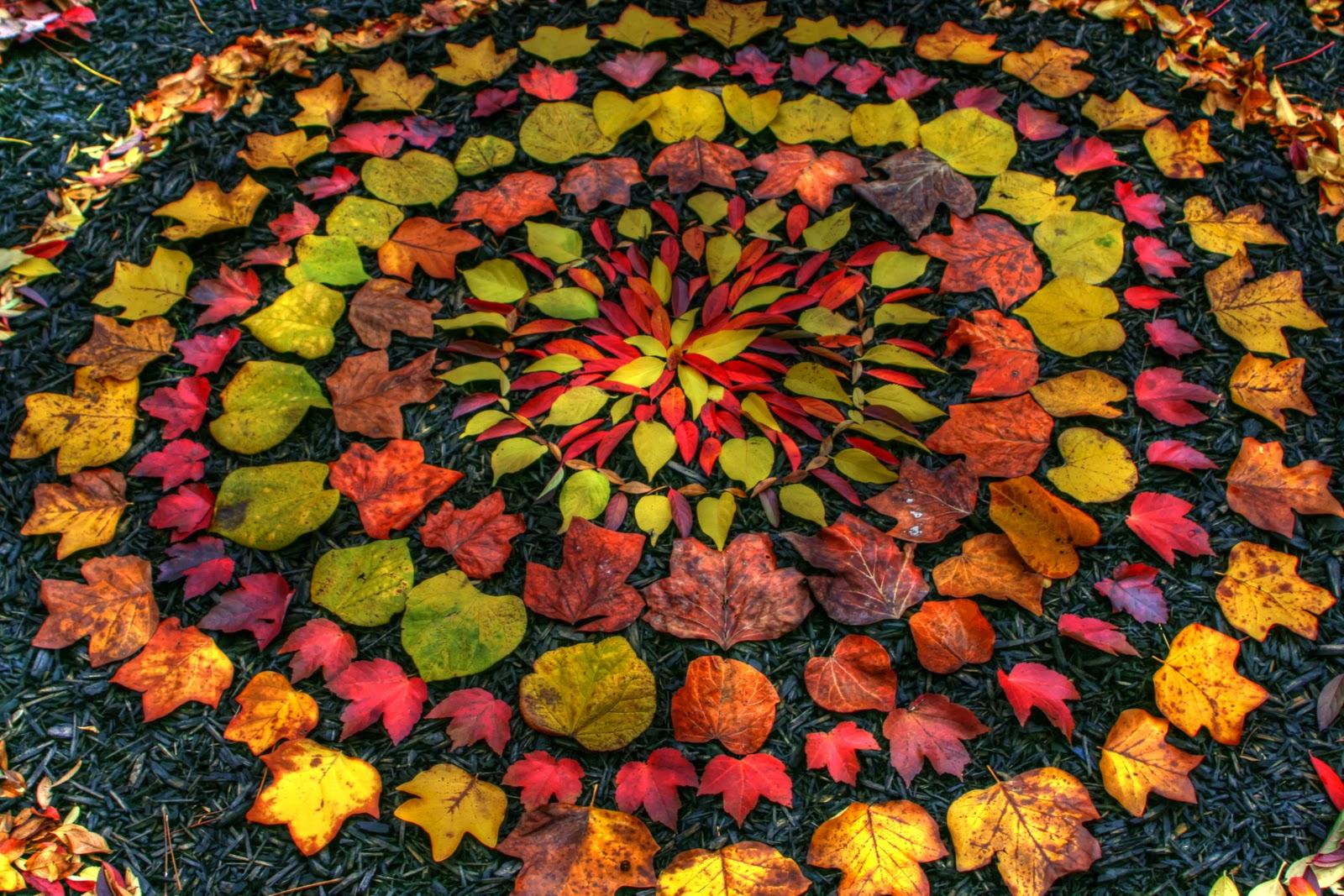 Leaf Mandala(1).jpg