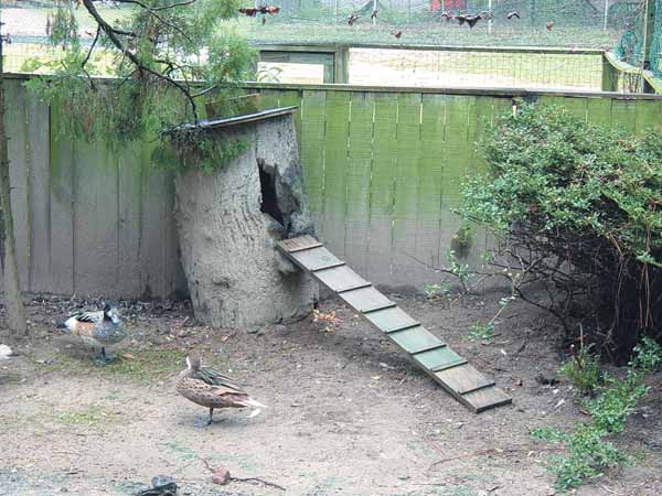 Various types of houses can be used for waterfowl
