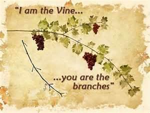 Vine and words
