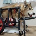 C:UsersuserDesktopTomomi2カット済み大型犬LL4輪380.jpg