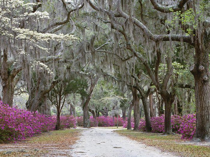 Savannah,ga Usa
