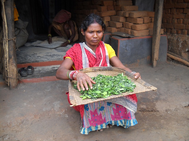 The 'barada' leafy green is sweet, easy to digest and rich in iron. Here, a tribal woman sun-dries the leaves so they can be stored for up to two months. Credit: Manipadma Jena/IPS