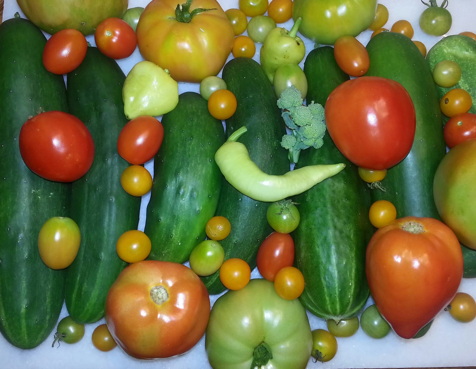 garden harvest haul picture