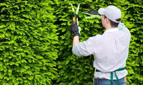 Quy trình chăm sóc cây xanh