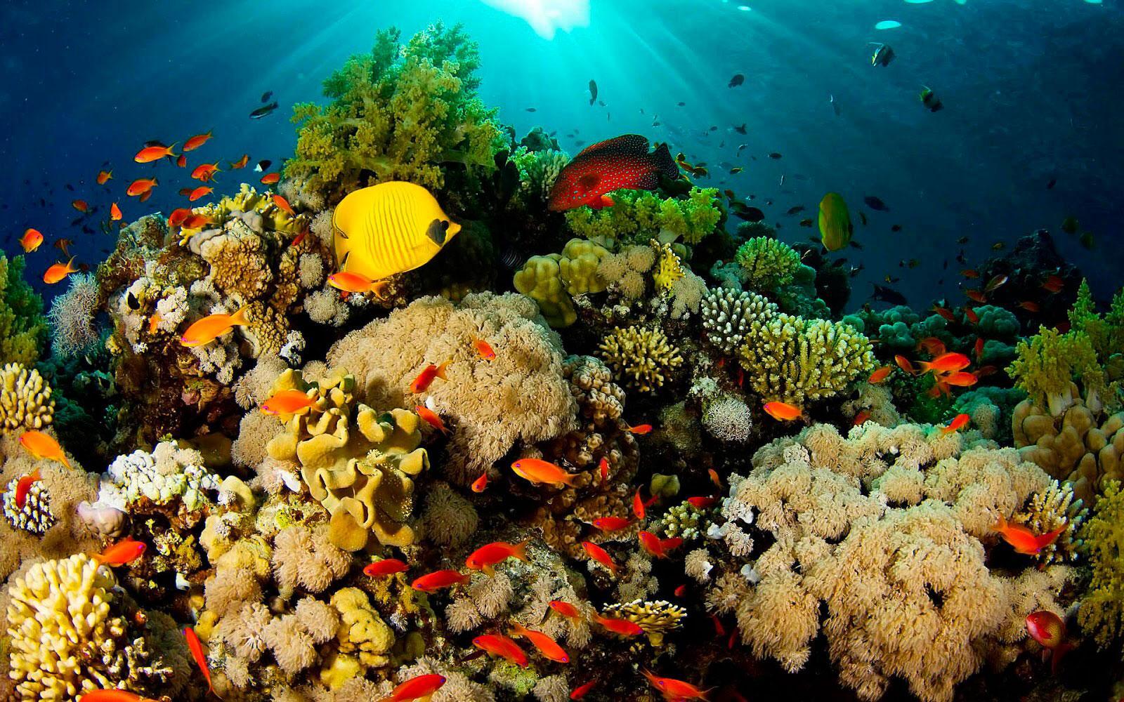 Un grupo de arrecife  Descripción generada automáticamente con confianza media