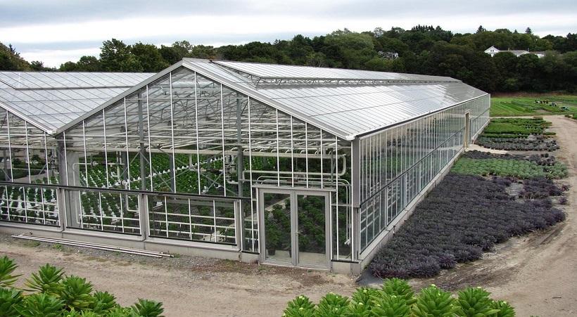 Dùng tấm lợp Poly làm nhà kính trồng rau